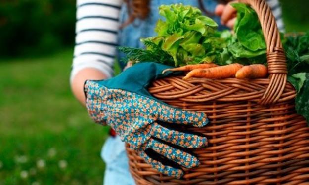 gardening-fresh-vegetables-basket-TS-162359422