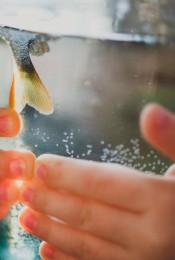 Как выбрать качественную рыбу (или обойтись без нее)