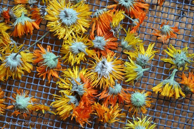 Calendula-petals