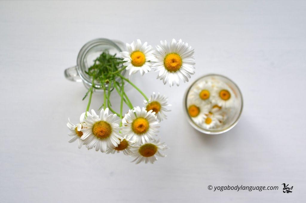 программы оздоровления и похудения